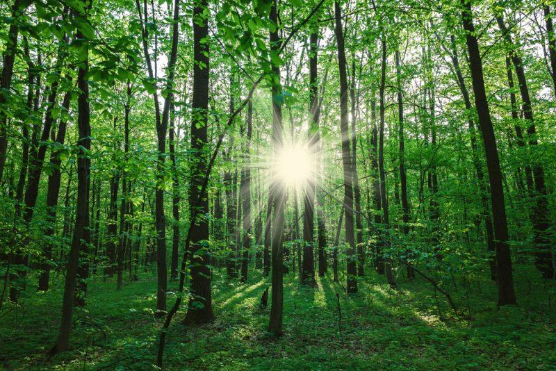 Waldbaden: Wohltat für Leib und Seele